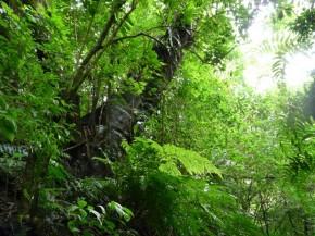 Regularização de atividades existentes desde 2008 voltará à discussão reçatra Código Florestal
